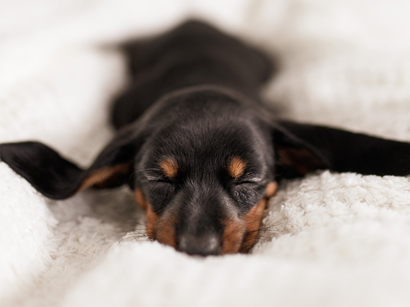 benefits of sleeping with your dog